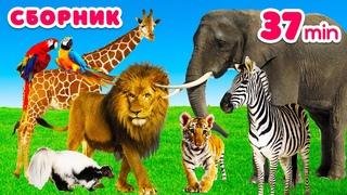 Как говорят животные для детей Звуки животных Развивающие мультики