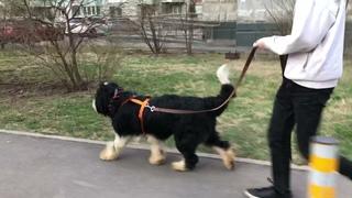 Филя собака в добрые руки из приюта