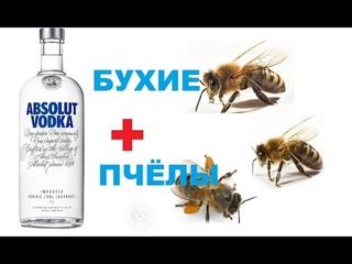 Пьяные Пчёлы.... Сводим семью при помощи алкоголя.