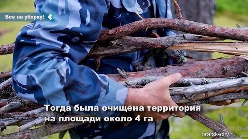 Субботник по очистке территории городских лесов от сухостойной и валежной древесины пройдет в Братске 9 октября