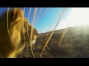 GoPro Lion Mouth Cam