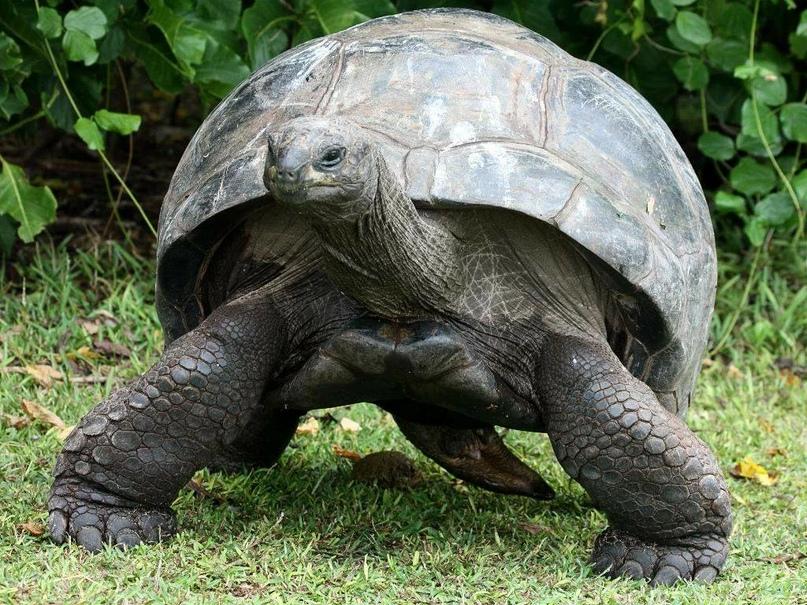 Самые долгоживущие животные на Земле, изображение №8