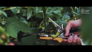 Устройство для подвязки растений - Тапенер TB-F