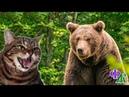 Медведица приближалась, как вдруг путь ей преградила КОШКА, выгнув спину и распушившись, она