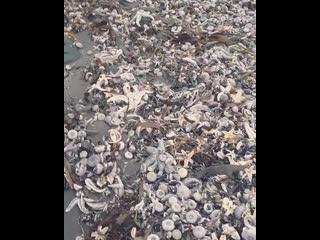 На Камчатке погибли тысячи морских животных из-за загрязнения океана
