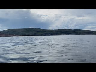 Горбатый кит в Териберке