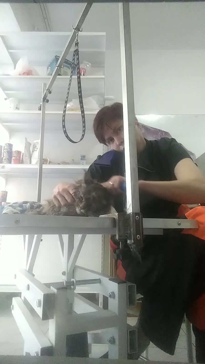 Live: Стрижка собак кошек Ветеринария Магнитогорск