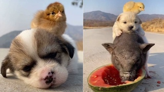 Cutest Baby Animals Doing Funny Things | Funny Dogs Videos Compilation | Cutest Puppies In The World