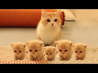 Super Cute Kittens   Episode 18   Baby Cats Beautiful  Funny And Cute Cat Videos Compilation