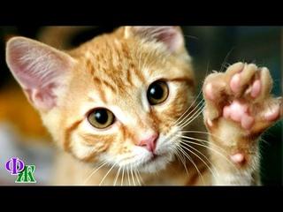 «Ты заняла моё место» Кошка требовательно смотрела на гостью и трогала её лапой, а девушка не поняла