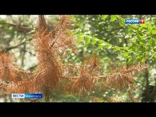 В Хабаровске спасают от изнуряющей жары «зеленые легкие» города