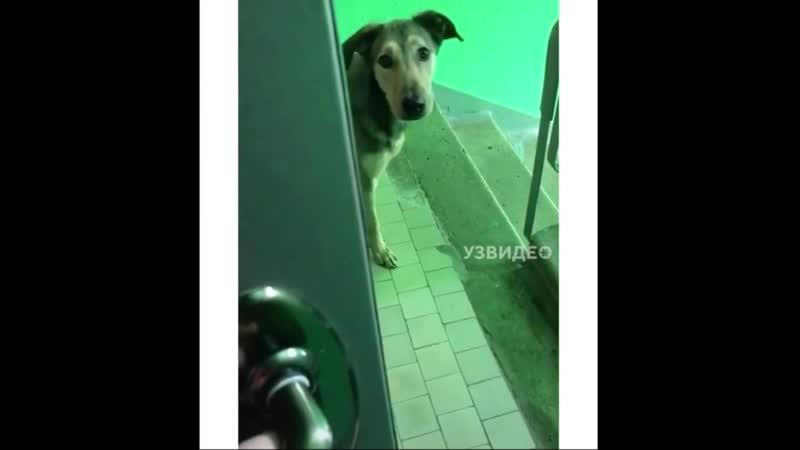 Привел домой собак