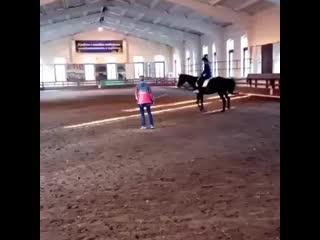 Моя слабость Лошади