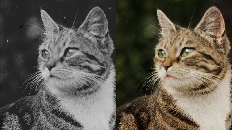 Colorization of a 120 Year Old Cat Photo