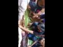 Sadis Wanita 54 Tahun Tewas Dimangsa Piton 7 Meter Jasad Ditemukan Utuh