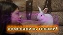 Соня и Ляля поменялись телами! Баку заколдовал их! ♥ Nepeta
