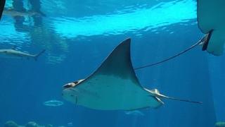 Relax Music Amazing Underwater World - Удивительный Подводный Мир.