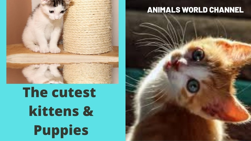 Cute baby animals The cutest animals can only be Puppies and kittens 2020 YouTube