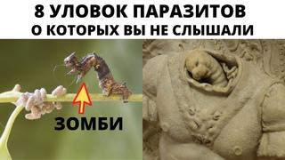 Паразиты мира насекомых и мира людей
