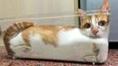 Hãy đỡ tôi dậy đi cười chịu hết nổi rồi ông ngáo ạ 😅 Pha hài hước của Chó mèo 😂 Dính ngải cười