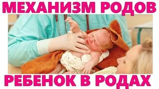 КАК РОЖДАЕТСЯ ВАШ МАЛЫШ   Что происходит с ребенком во время родов