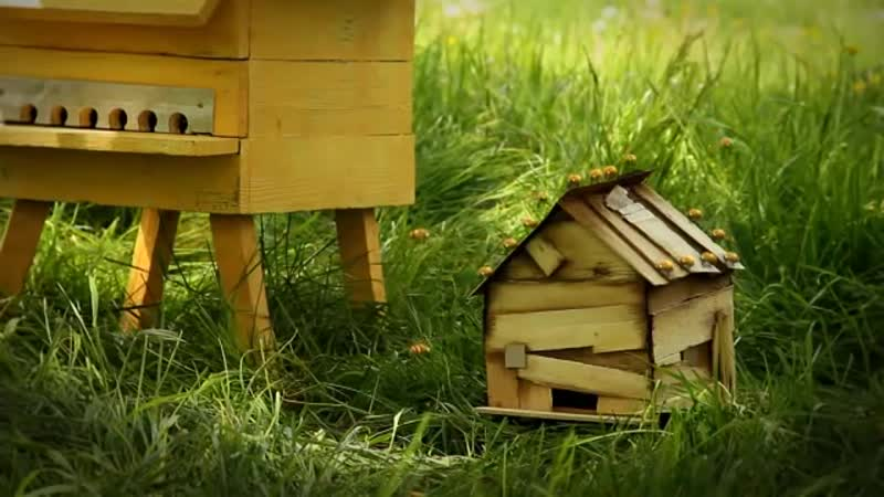Minuscule - Honey fly _ Mouche à miel (Season 2)