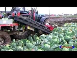 Новая Современная Сельскохозяйственная техника, автоматические урожая капустой машину modern agricul