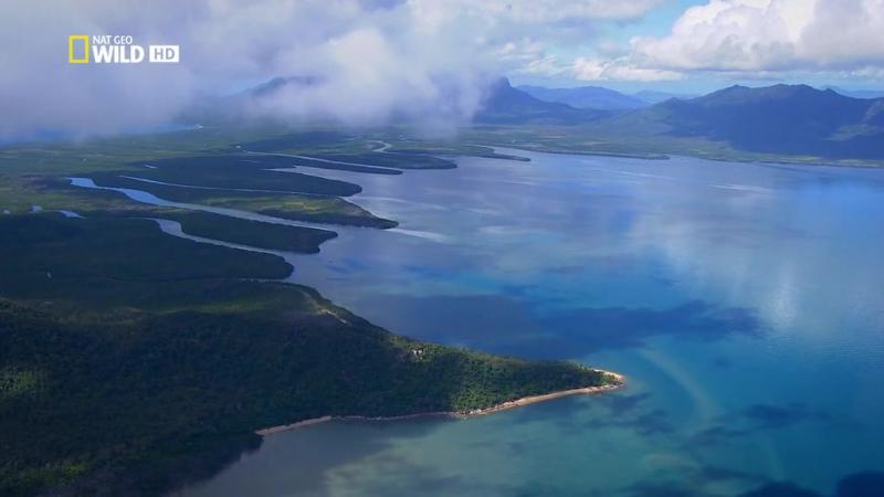 Жизнь на Большом Барьерном рифе 2014