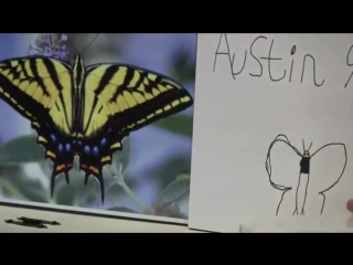 Critique and feedback - the story of austins butterfly - ron berger-2