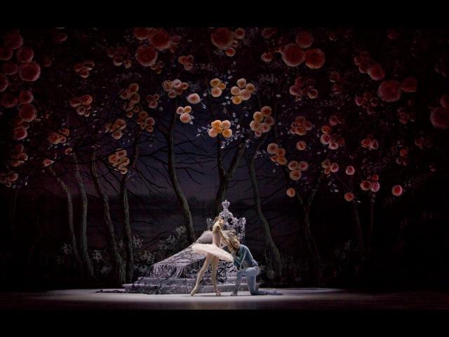 Спящая Красавица в Михайловском театре The Sleeping Beauty at the Mikhailovsky Theatre
