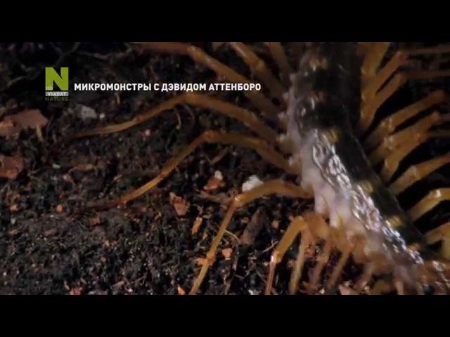 Микромонстры с Дэвидом Аттенборо промо программы на Viasat Nature HD