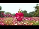 Lolita Lempicka - SO SWEET - New fragrance 2016