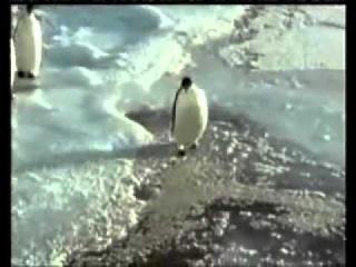 Пингвин упал - The penguin fell