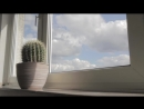 Кактусовый драм-н-бэйс - Cactus DrumBass