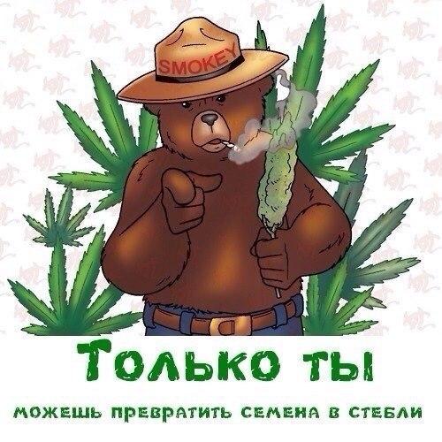 Медведь и конопля посадить вырастить марихуану