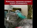Самые невозмутимые коты!) и не только)