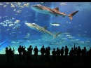 Sharks Dubai Aquarium Underwater Zoo Dubai Mall HD