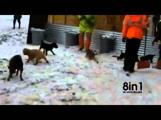 Ликвидация свалки. Псы и крысы