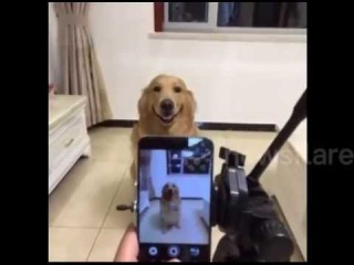 Dog actually smile for the camera on command