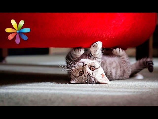 Как отучить кошку точить когти о мебель Все буде добре Выпуск 767 от 02 03 16