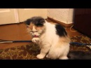 Кошка приболела и чихает