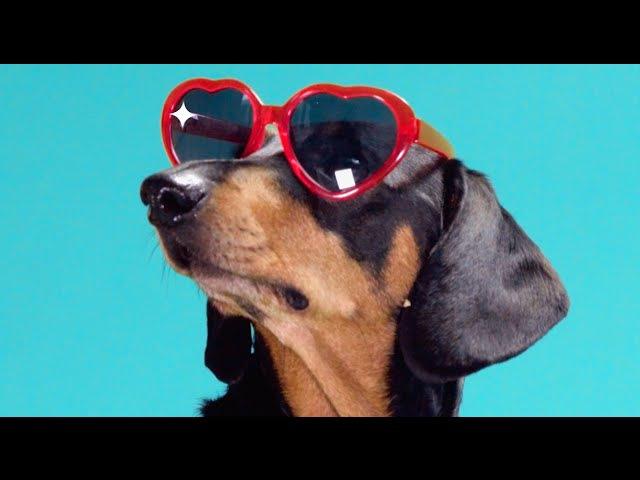 TIEKS Sunshine feat Dan Harkna Official Video