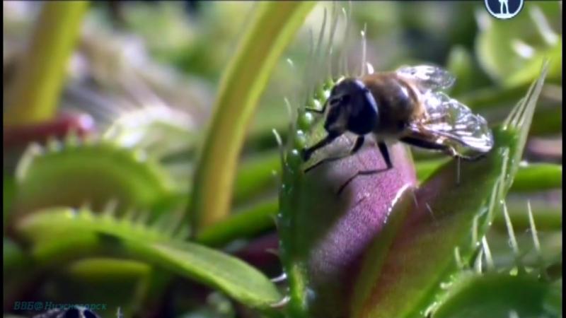 BBC Жизнь на планете Земля Борьба за выживание Документальный животные 2009