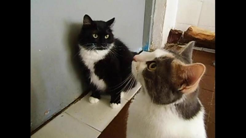 Таппенс и Моника