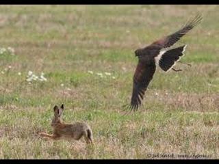 Самые быстрые птицы мгновенная смерть