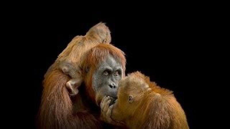 National Geographic Дикий Запад Ровно в полдень Документальный фильм про животных