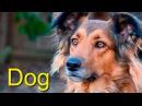 Домашние животные для детей на английском языке. Голоса животных. Как говорят животные HD