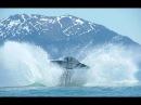СЕКРЕТНОЕ донесение шотландских моряков об НЛО встревожило не только береговую охрану Правда об НЛО