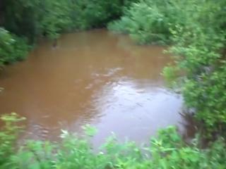 Дорога Неболчи Бокситогорск. .час. утра всего лиш небольшой дождик на сутки..