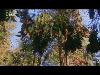 Непокорная Мексика (2018) (Mexico Untamed) Серия 01. Охота и выслеживание
